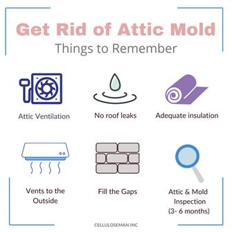 diy attic mold removal